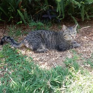 Rehoming 1 beautiful cat