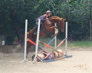 Mare with a super nice jump