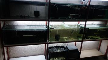 Fish Tanks with Stand