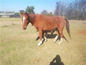 4 farm horses