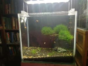 Bonsai scape aquarium for sale