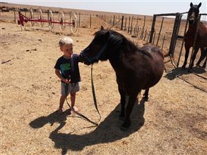 Sweet little pony for sale