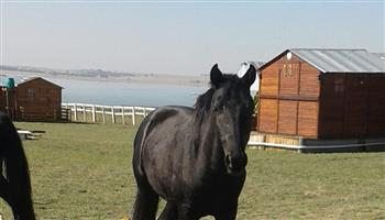 Male 2 year old colt