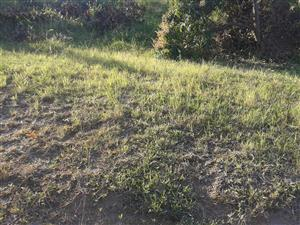 VACANT LAND TO LET