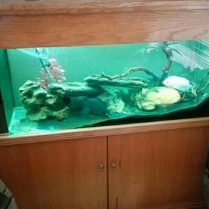 Stunning 240litre aquarium.