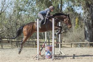 Stunning tall 16.3h mare