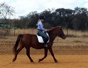 Easy Pony for sale