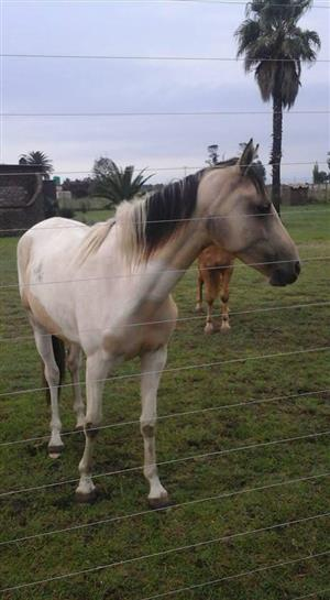 Horses up for sale