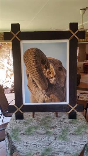 Fotos deur internasionaal bekende wildlewe fotograaf Trevor Kleyn