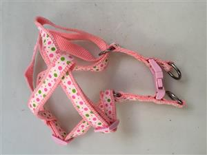 Rogz dog leash and harness