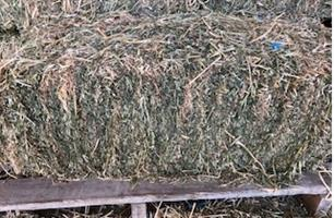 Lucerne Hay Small Bales x 800 Bales