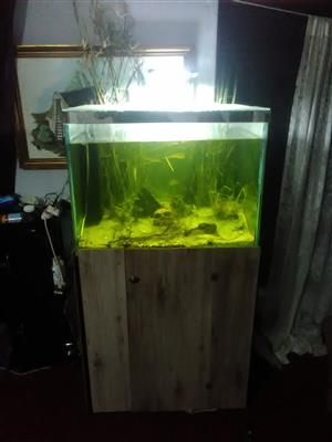 Urgent sale fishtank