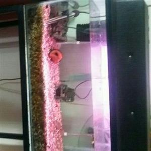 60cm Tank for sale