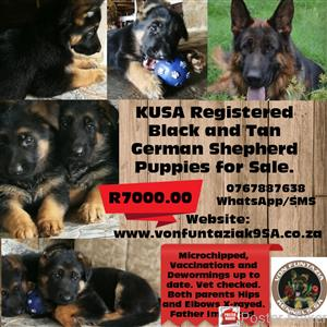 German Shepherd Black and Tan KUSA Registered Puppies for sale