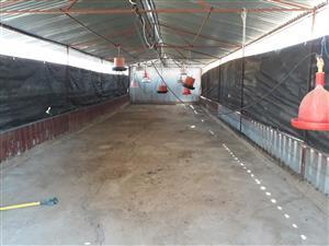 Chicken farm Bon Accord R1 700 000 - strong borehole