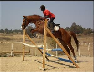 Tb gelding with stunning jump
