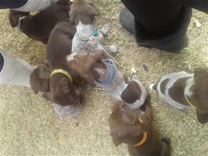 gps puppys