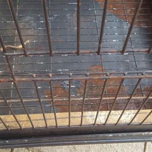 Parrot/Papegaai cage