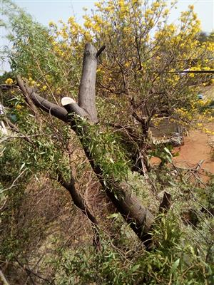 Tree felling,lrrigation systems and landscaping