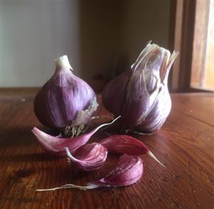 Garlic Egyptian Pink