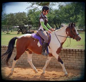 Impressive Skewbald Pony Mare for sale