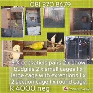 Breeding cocketiels and cages