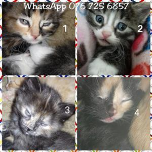 Kittens - ready to be adopted