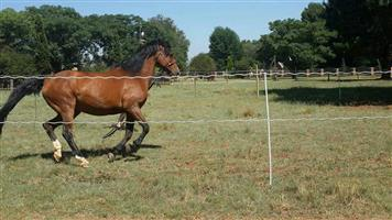 Mare and Filly for sale