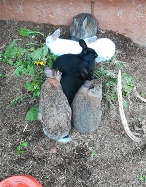 Rabbits/ bunnies looking for a home