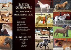 MINIATURE HORSE AUCTION - HART E & GUEST SELLERS INVITE YOU TO AN AUCTION OF ELITE PREMIUM MINIATURE HORSES