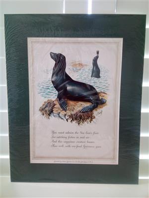 Guinness 'The Sea-Lion' Genuine Print Circa: 1952 by Artist: C.F Tunicliffe