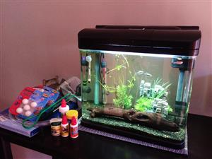 Fish Tank, Tropical Fish and ALL Accessories