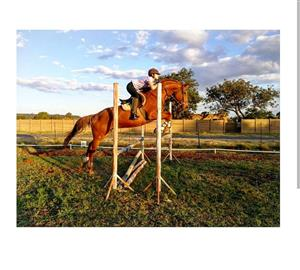 Beautiful Thoroughbred Gelding for sale!