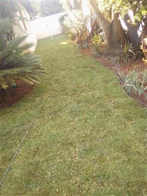 Instant quality Kikuyu lawn available for supply delivery and installation at best price