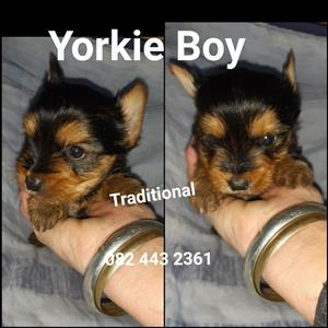 dogs pets pets For Sale in Dogs and Puppies in Johannesburg | Junk Mail