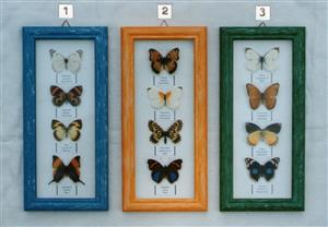 Real framed butterflies