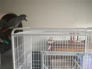 Large Parrot Cage, suitable for Greys, Macaws, Cockatoos