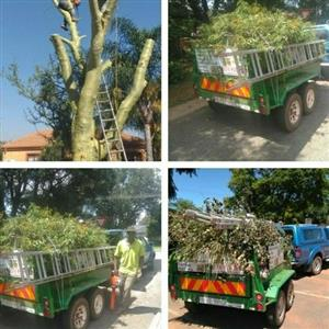 rubbish removal tree felling
