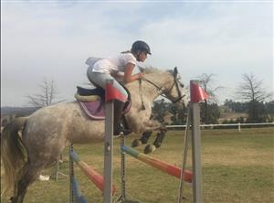 Talented Pony for beginner to advanced riders