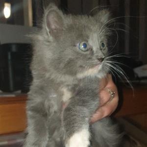 Baby house kittens