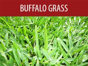 Instant Lawn/ Turf/ Grass fresh from our farm to your garden - Call : 066 066 2299