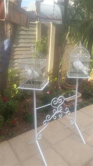 Pure white doves for rent.  For any special occasion.