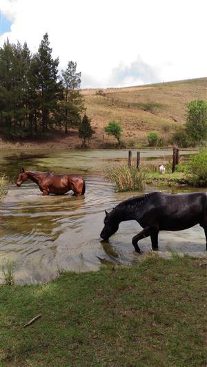 Retirement Farm for horses