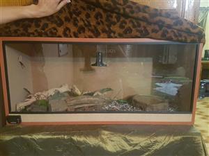 Corn snake and enclosure
