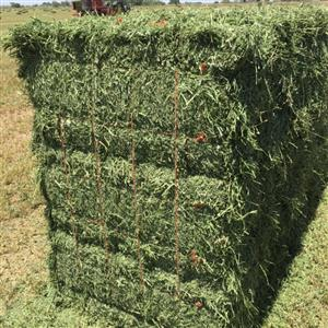 quality alfalfa hay for sale