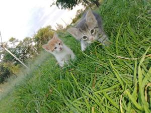2 beautiful kittens ready for new home