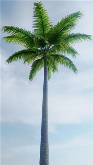 PALM TREE SUPPLIES