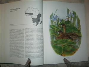 Ducks of Sub-Saharan Africa