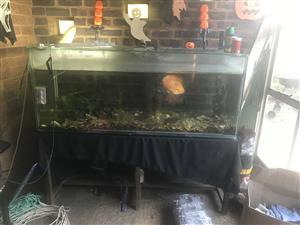 Fish tank fully equipped