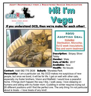 Vega is looking for the PURRFECT family - a cat to adopt from CatzRus.